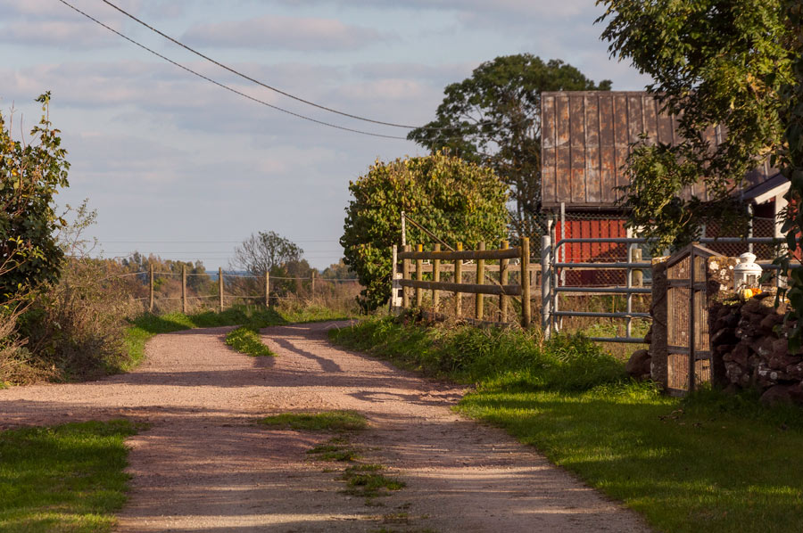 country_road_in_rural_landscape