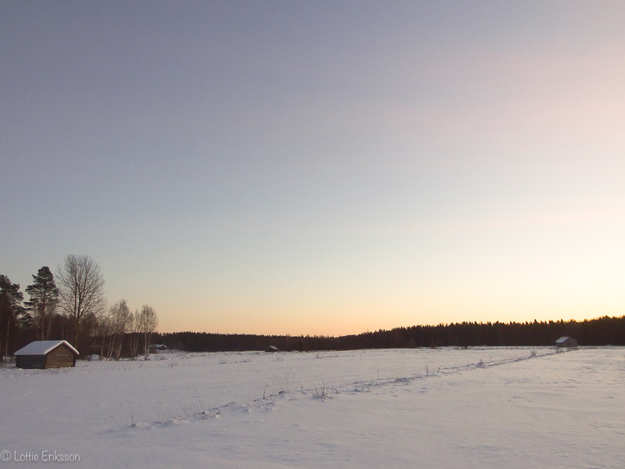 landscape_field_winter